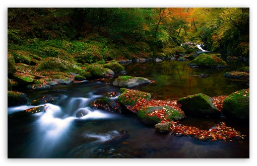 autumn forest river